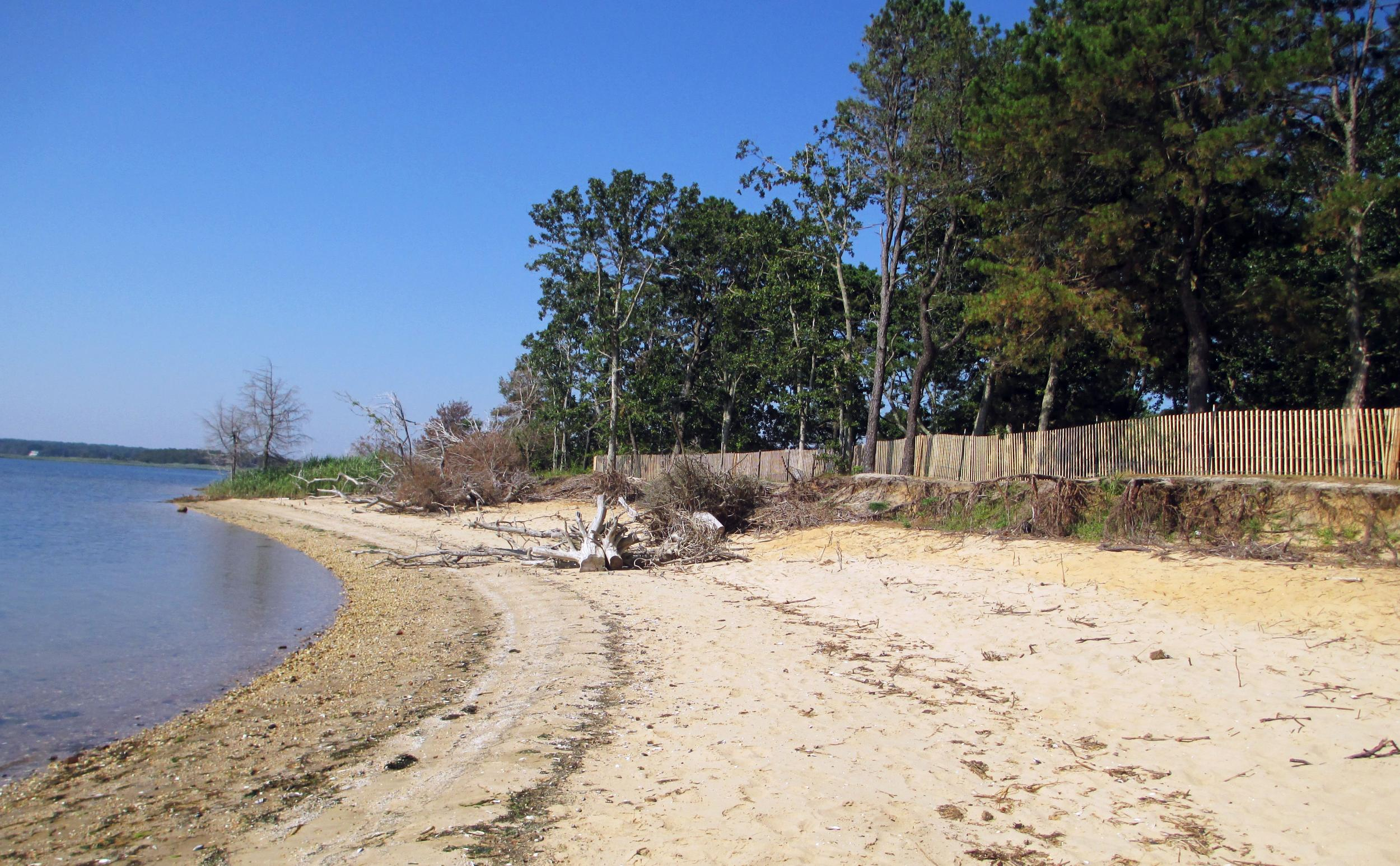 Beach and bluff shoreline at Indian Head County Park